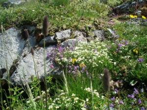 Delicate-seeming flowers create a natural rock garden.